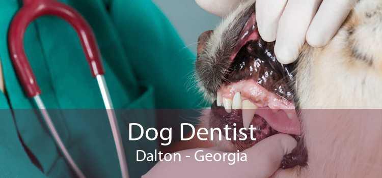 Dog Dentist Dalton - Georgia