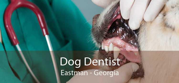 Dog Dentist Eastman - Georgia
