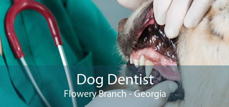 Dog Dentist Flowery Branch - Georgia