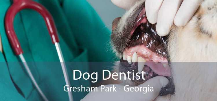 Dog Dentist Gresham Park - Georgia