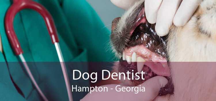Dog Dentist Hampton - Georgia