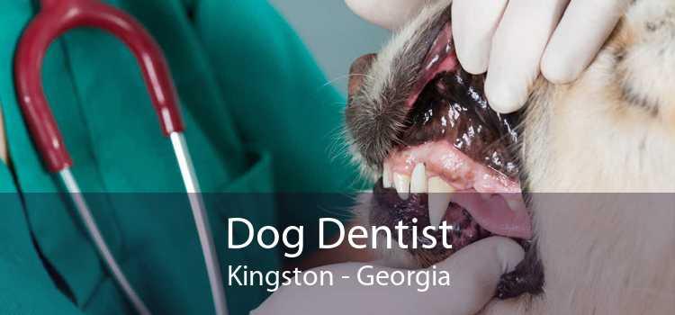Dog Dentist Kingston - Georgia