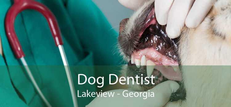 Dog Dentist Lakeview - Georgia