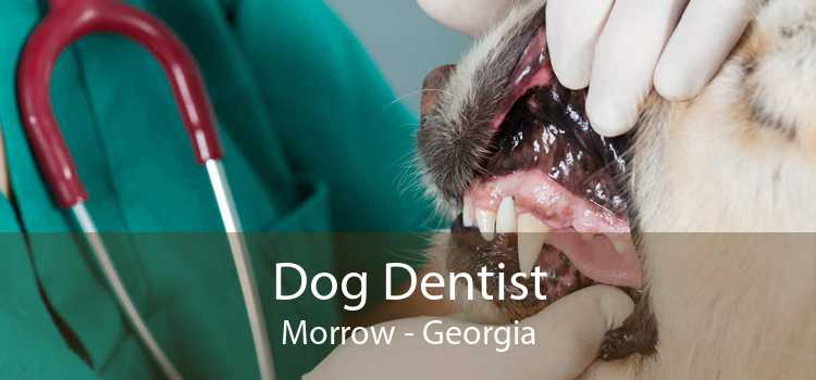 Dog Dentist Morrow - Georgia