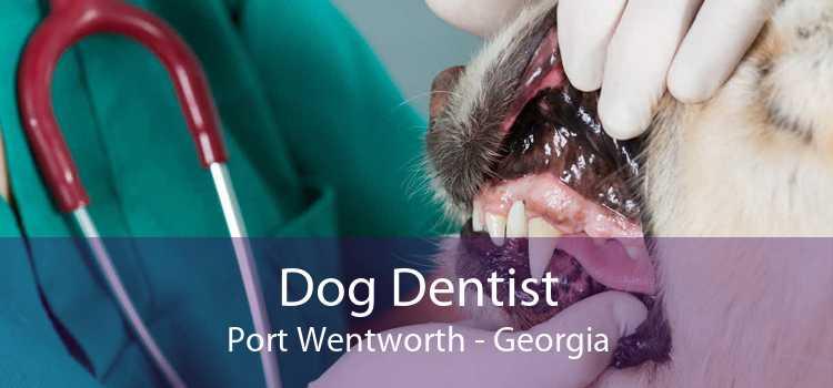 Dog Dentist Port Wentworth - Georgia