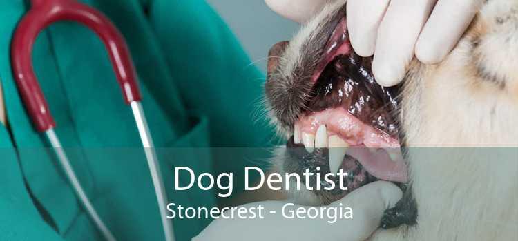 Dog Dentist Stonecrest - Georgia