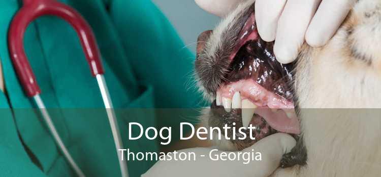 Dog Dentist Thomaston - Georgia