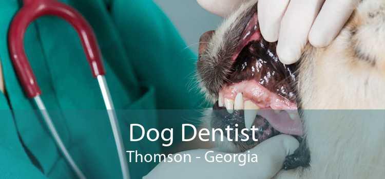 Dog Dentist Thomson - Georgia