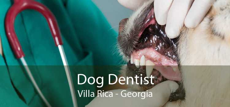 Dog Dentist Villa Rica - Georgia