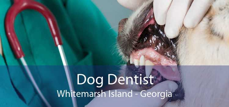 Dog Dentist Whitemarsh Island - Georgia