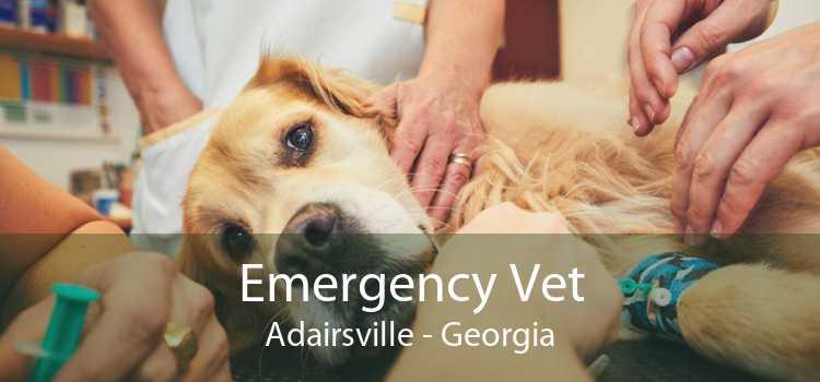 Emergency Vet Adairsville - Georgia