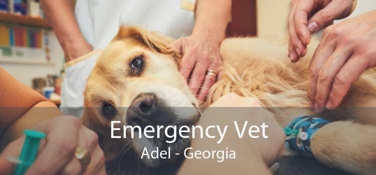 Emergency Vet Adel - Georgia