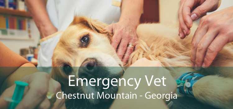 Emergency Vet Chestnut Mountain - Georgia