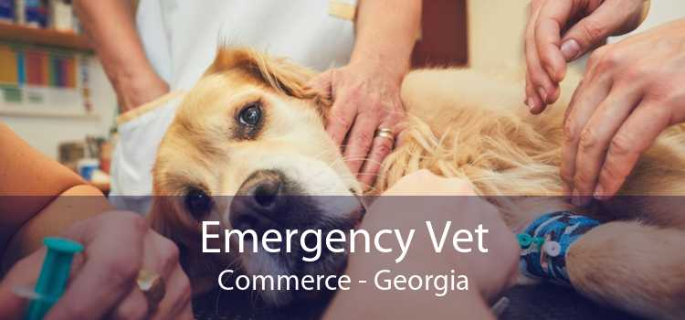 Emergency Vet Commerce - Georgia