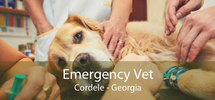 Emergency Vet Cordele - Georgia