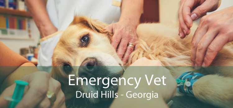 Emergency Vet Druid Hills - Georgia