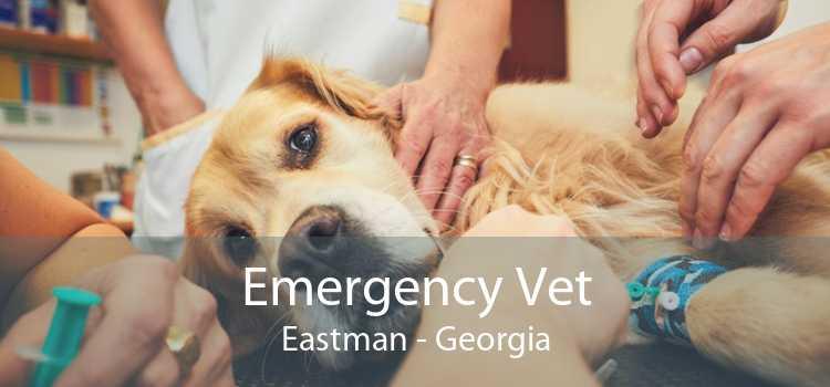 Emergency Vet Eastman - Georgia