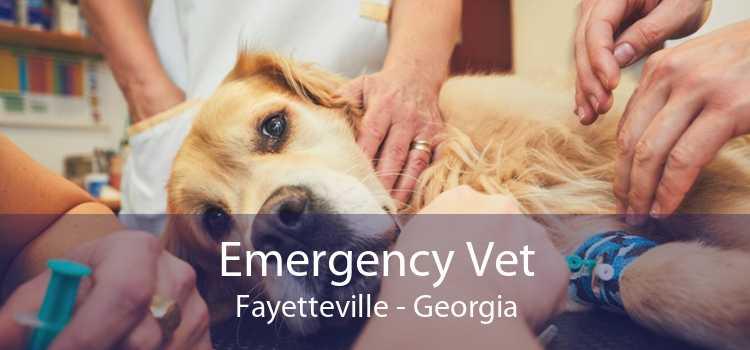 Emergency Vet Fayetteville - Georgia