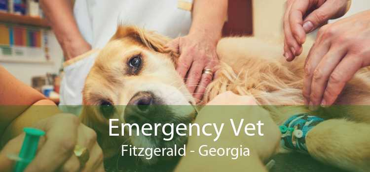 Emergency Vet Fitzgerald - Georgia