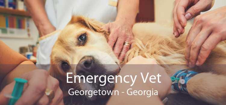 Emergency Vet Georgetown - Georgia