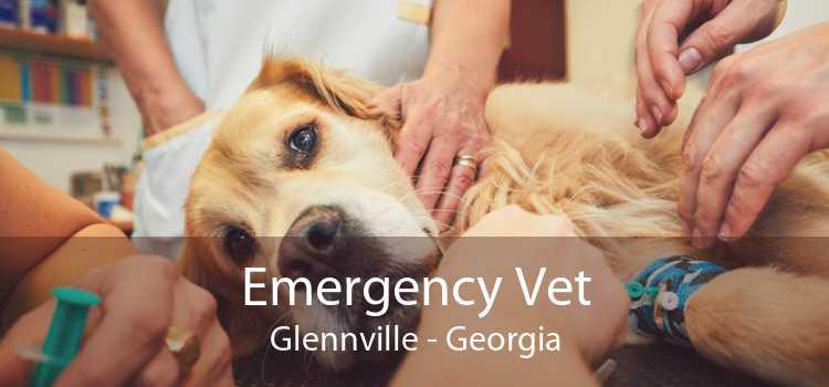 Emergency Vet Glennville - Georgia