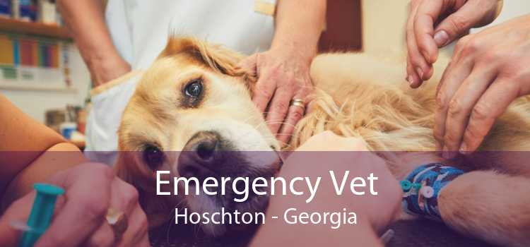 Emergency Vet Hoschton - Georgia