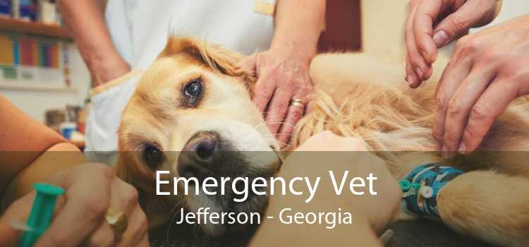 Emergency Vet Jefferson - Georgia