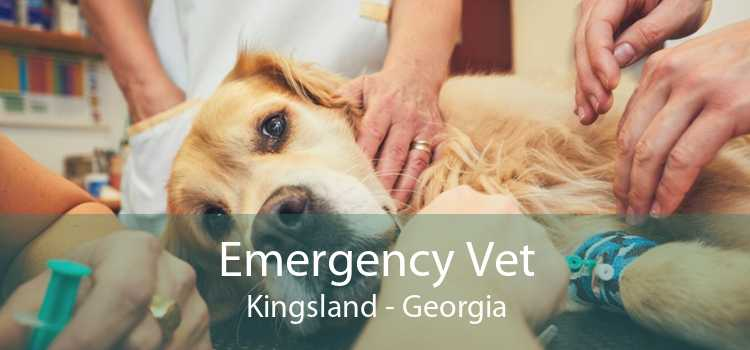 Emergency Vet Kingsland - Georgia