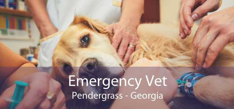 Emergency Vet Pendergrass - Georgia