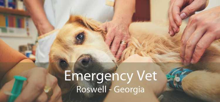 Emergency Vet Roswell - Georgia