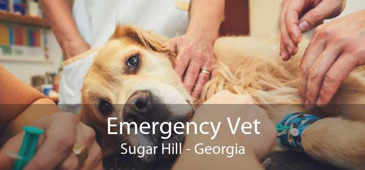 Emergency Vet Sugar Hill - Georgia