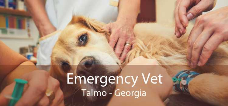 Emergency Vet Talmo - Georgia