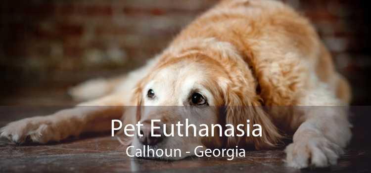 Pet Euthanasia Calhoun - Georgia