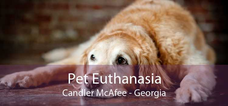 Pet Euthanasia Candler McAfee - Georgia
