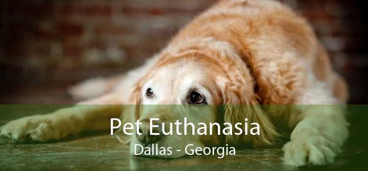 Pet Euthanasia Dallas - Georgia