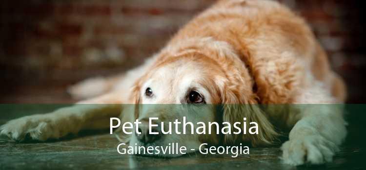 Pet Euthanasia Gainesville - Georgia