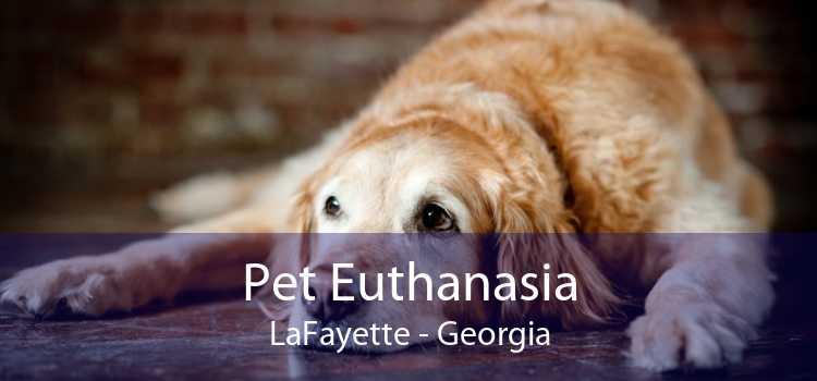 Pet Euthanasia LaFayette - Georgia