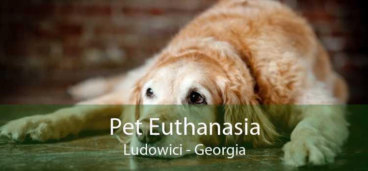 Pet Euthanasia Ludowici - Georgia