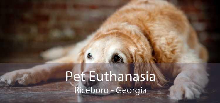 Pet Euthanasia Riceboro - Georgia