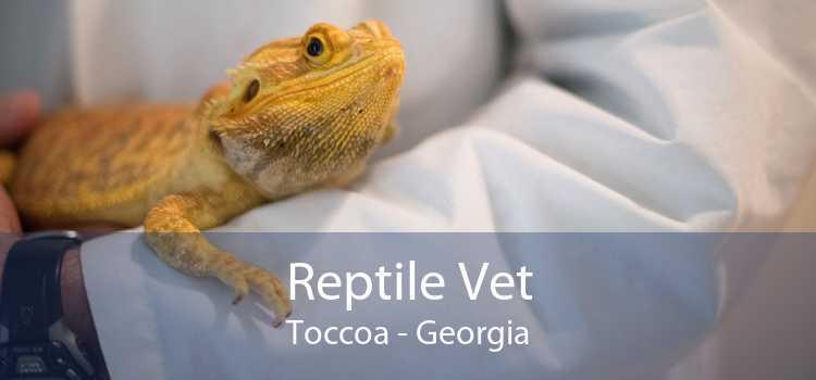 Reptile Vet Toccoa - Georgia