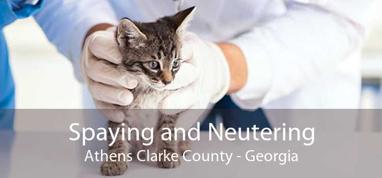 Spaying and Neutering Athens Clarke County - Georgia