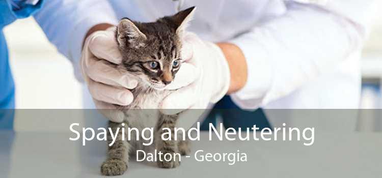 Spaying and Neutering Dalton - Georgia