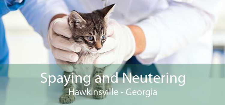 Spaying and Neutering Hawkinsville - Georgia