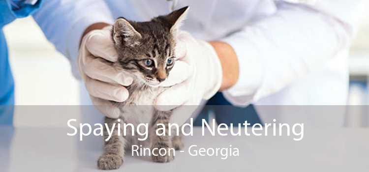 Spaying and Neutering Rincon - Georgia