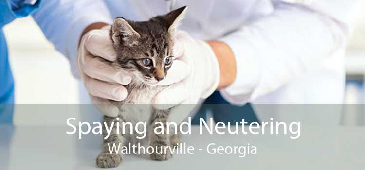 Spaying and Neutering Walthourville - Georgia