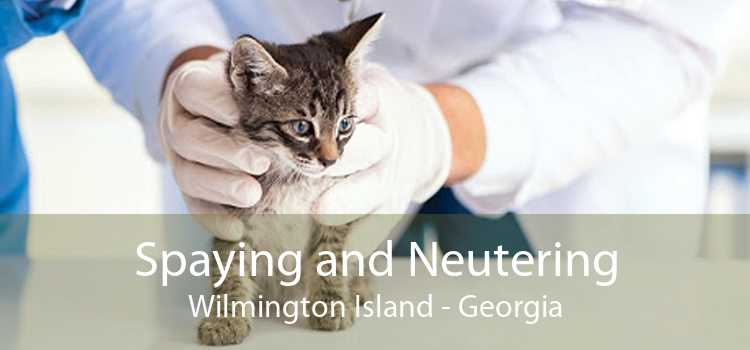 Spaying and Neutering Wilmington Island - Georgia